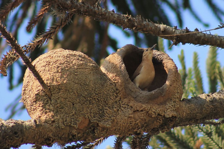 nido de pajaros hechos de barro y palos