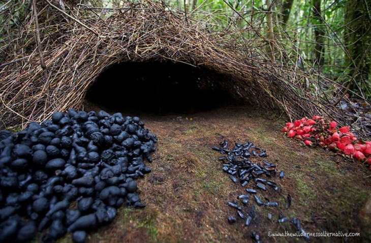 nido de pajaros en forma de cueva