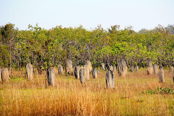 nidos en arboles hechos de palos secos