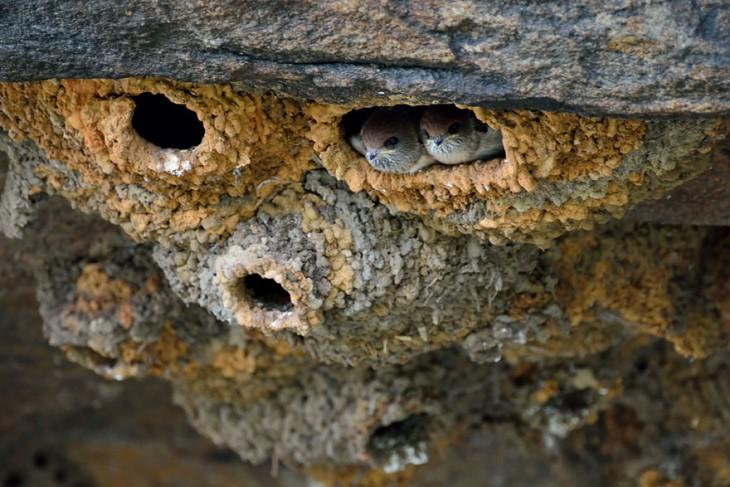 nido de pajaros en forma de ovalado con un agujero