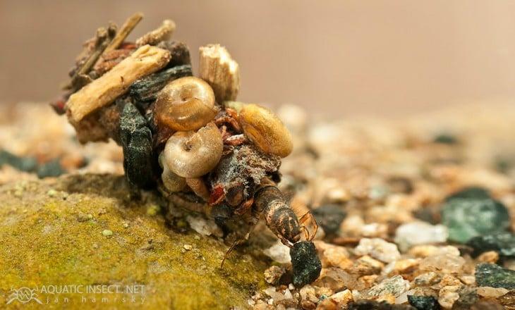 conjunto de piedras que sirven de hogar de insectos