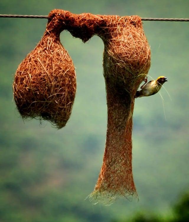 pajaro que sale de su nido enun arbol