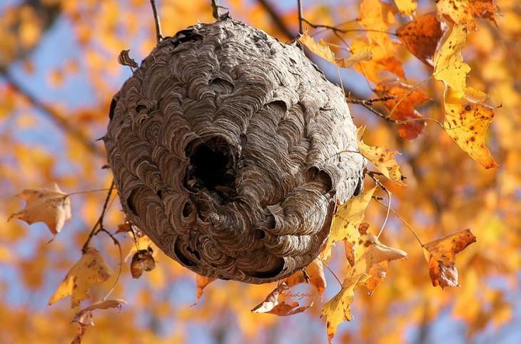 nido de varias capas hecho de hojas secas