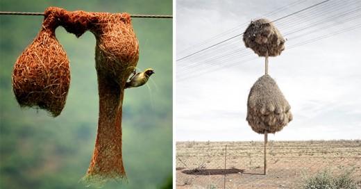 animales que son verdaderos aquitectos y las casas que construyen