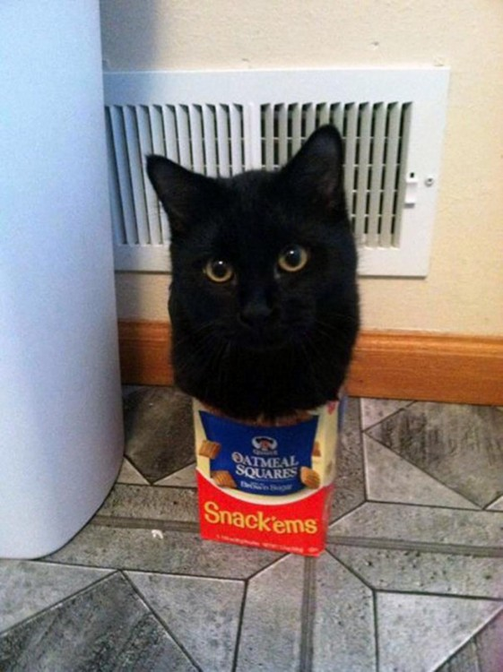 gato negro adentro de caja de avena