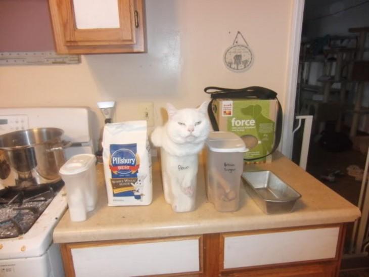 gato blanco adentro del envace de la harina
