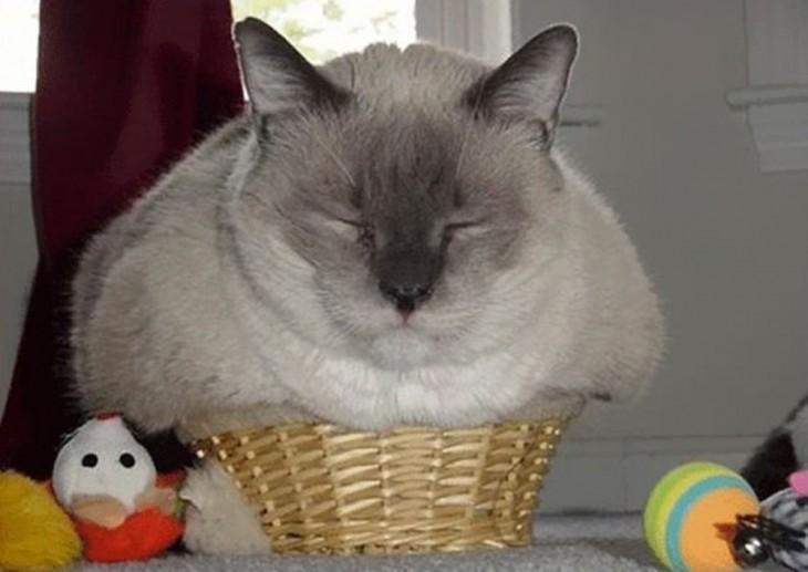 gato dormido adentro de una canasta