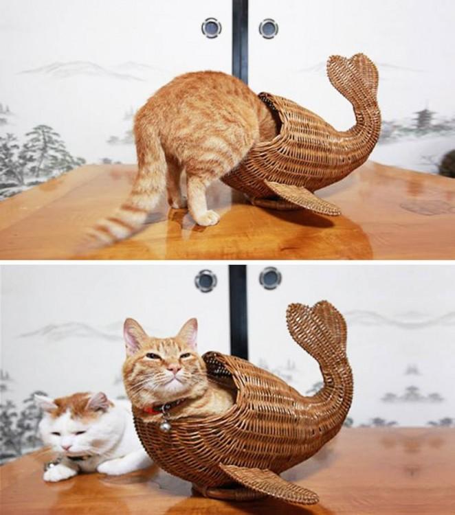 gato adentro de una canasta de huevos en forma de pescado