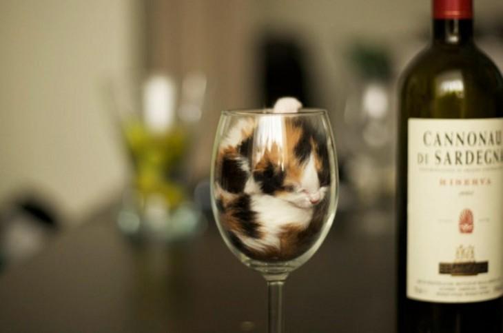 pequeño gato adentro de una copa de vino