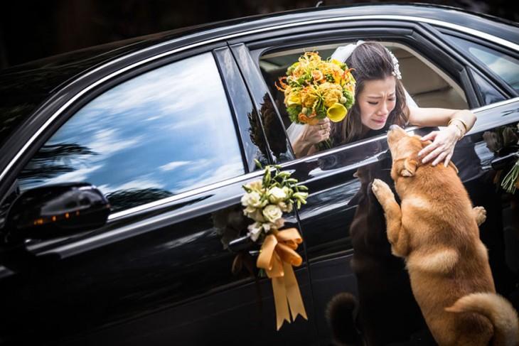 perrito que se despide de su ama al momento de irse a la boda