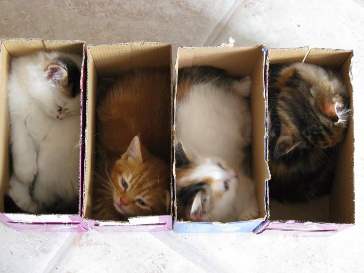 cuatro gatos en cuatro cajas de carton