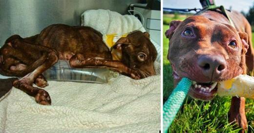 rescataron este perro al borde de la muerte