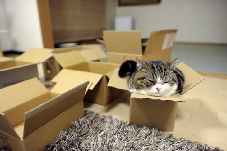 gato dormido en una caja de carton