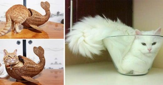 gatos que llevaron la curiosidada otro nivel
