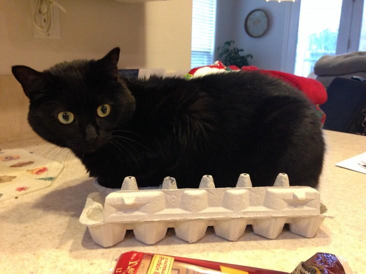gato negro acostado en la cartera de huevos
