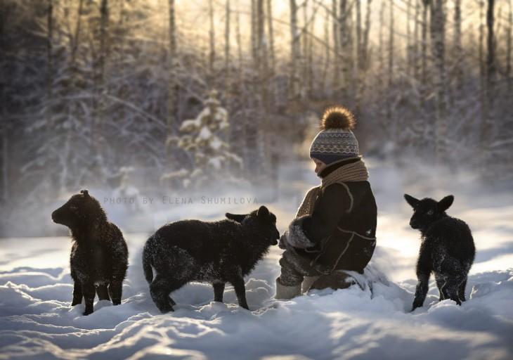 niño con ovejas negras