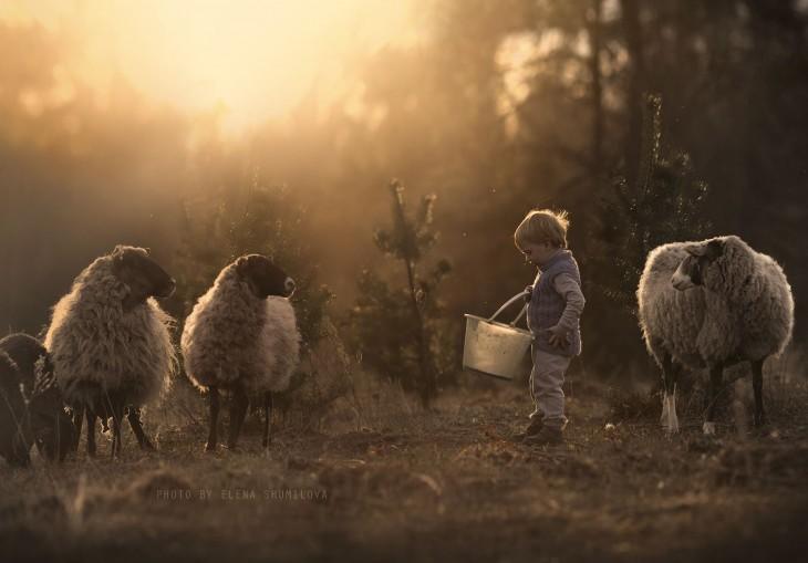 niño y ovejas comiendo