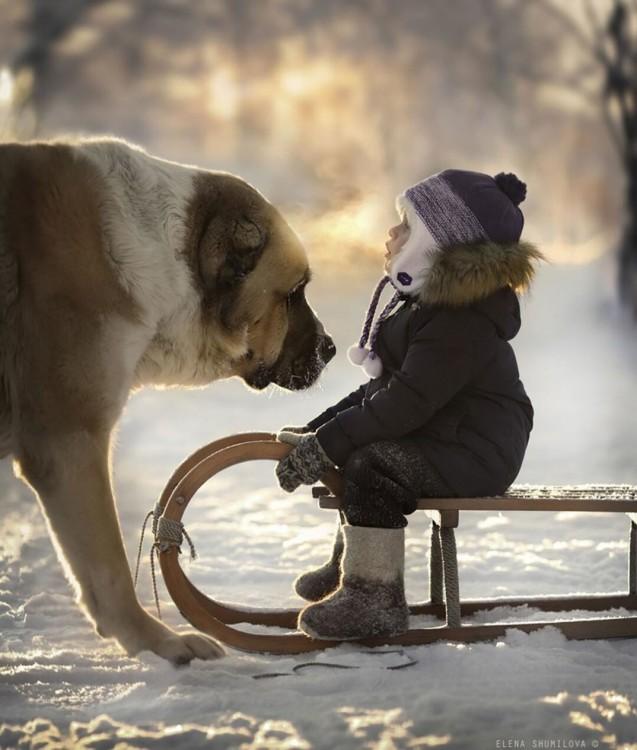 niño en trineo y perro