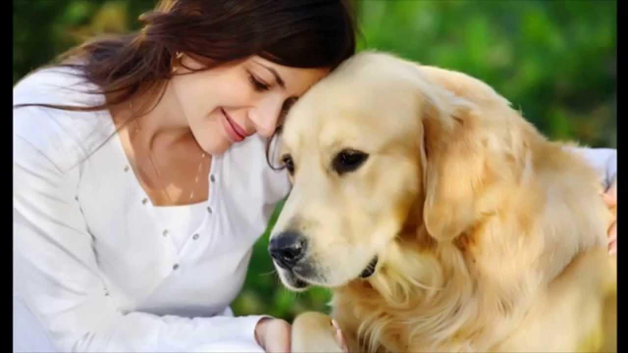 Resultado de imagen para Perros tristes con humanos