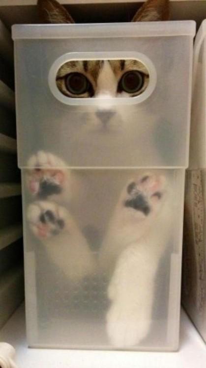 gato al cual se le ven solo los ojos adenntro de un envace de plastico