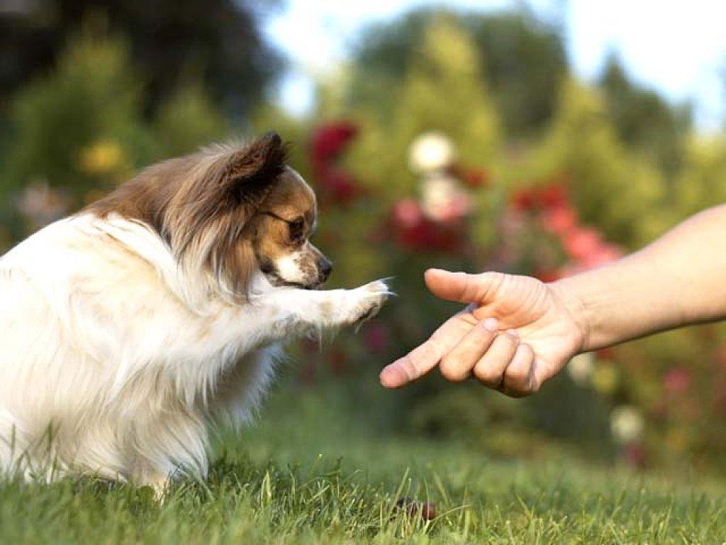 10 cosas que los perros son capaces de predecir - Animales con personas apareandose ...