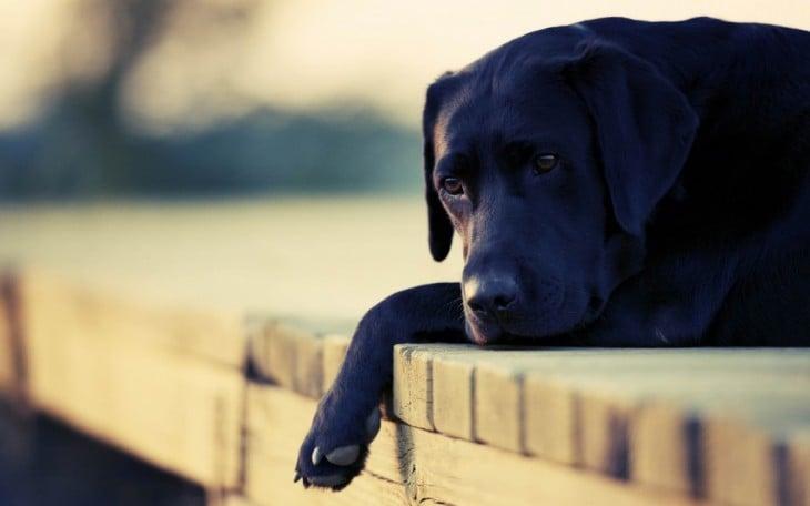 perro negro triste echado en un muelle