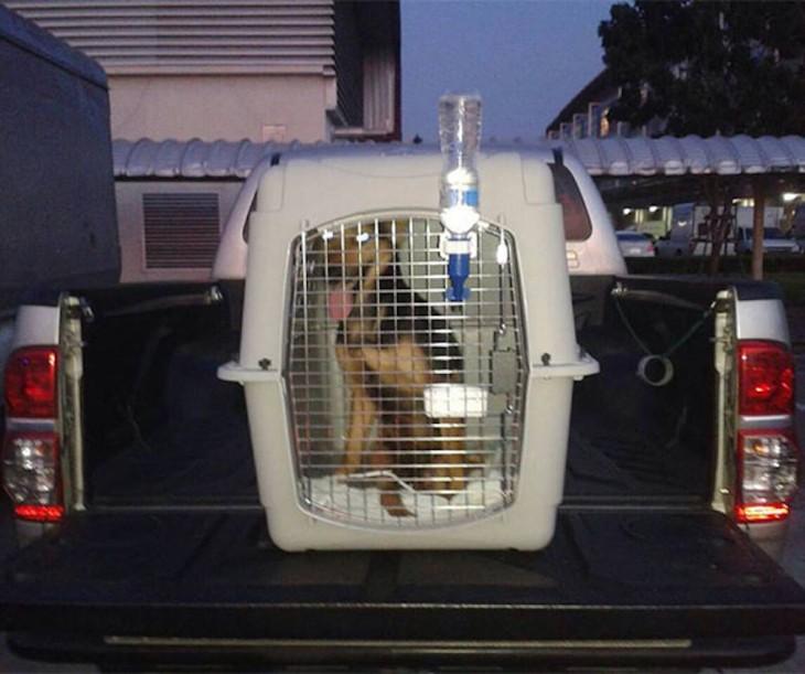 perrito paraplejico es trasladado en transportadora