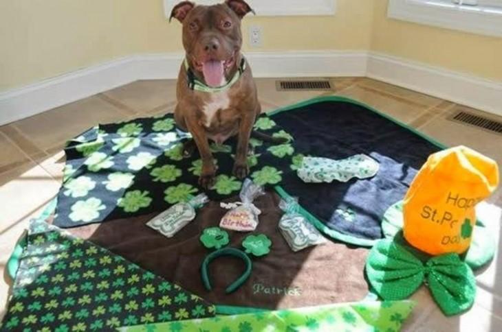 perro sentado flores verde