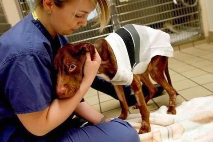 perro desnutrido veterinaria
