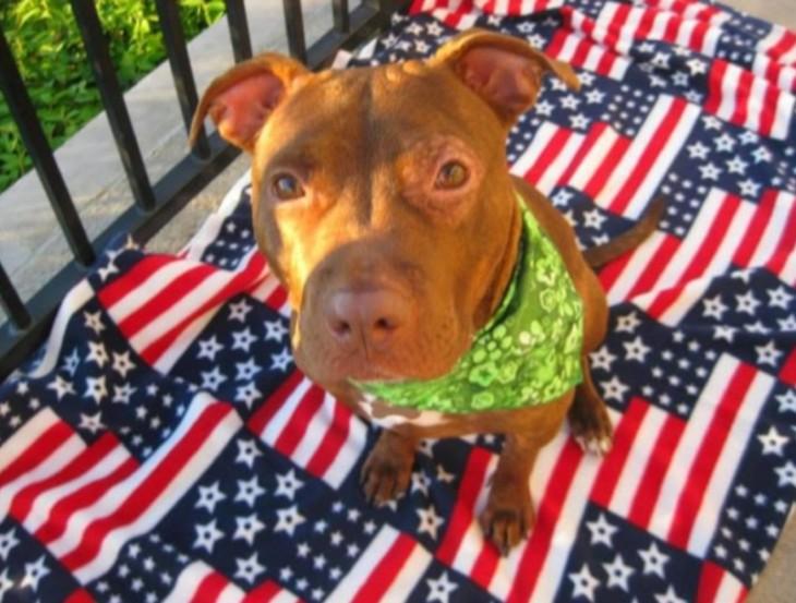 perro con bandera americana