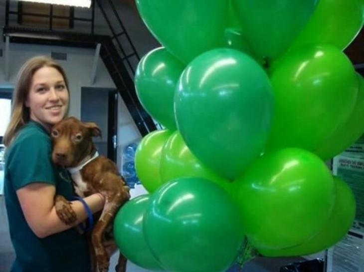 perro con globos verdes