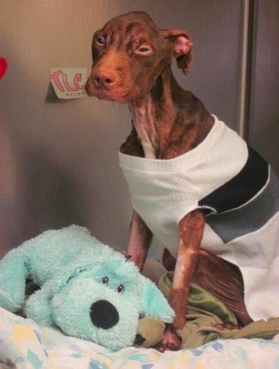 perro desnutrido en veterinaria
