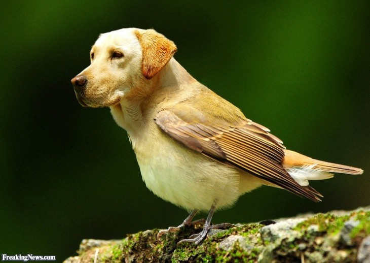 perros con cabeza de pájaros