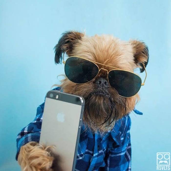 selfie de un perro con lentes y iphone