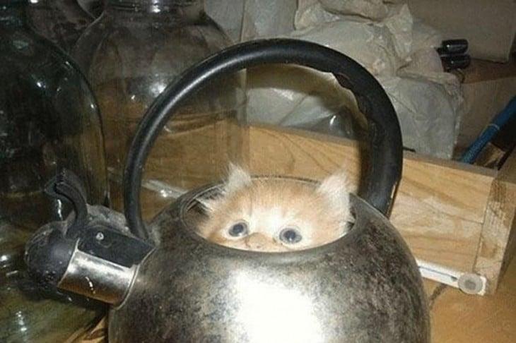 pequeño gato dorado dentro de una tetera