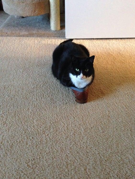 gato negro con mancha blanca arriba de un zapato