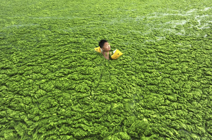 Niño nadando entre las algas en Qingdao, Shangdong