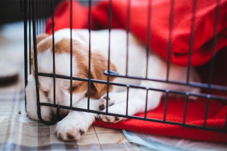 Perro en una jaula con una cobija roja