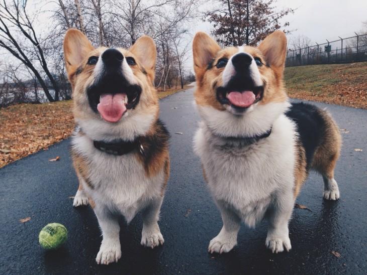 Perros idénticos jugando en el parque
