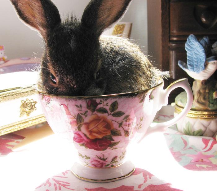 conejo dentro de una taza con una flor