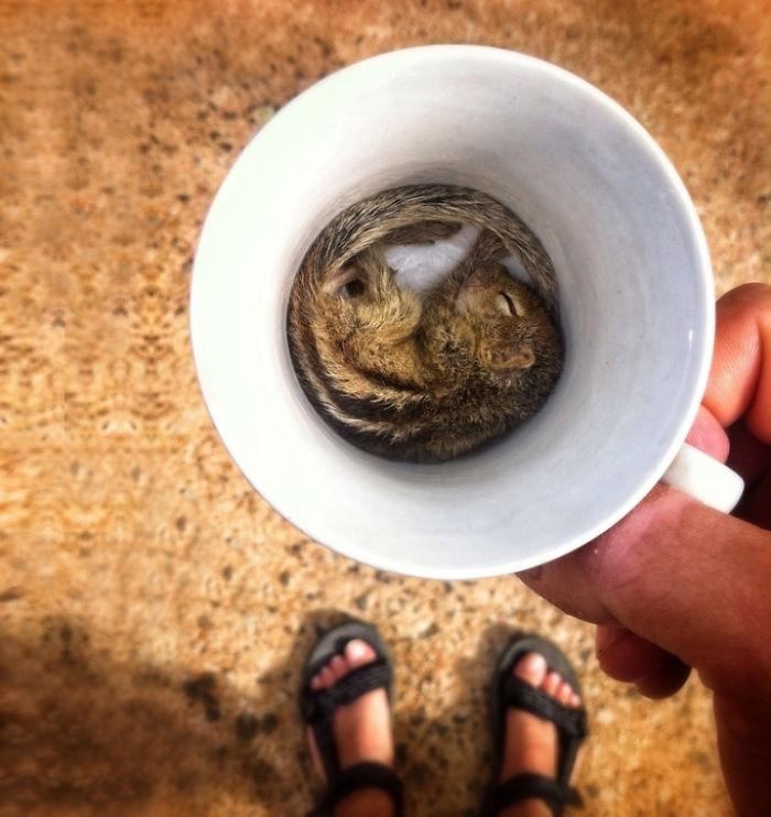 ardilla dormida dentro de una taza