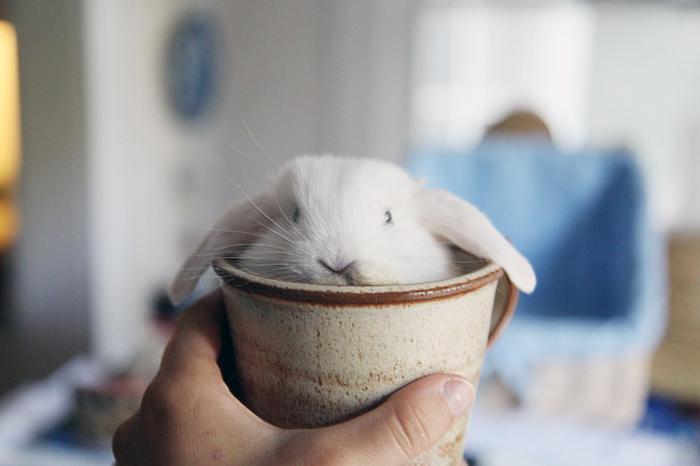 conejito dentro de una taza de barro