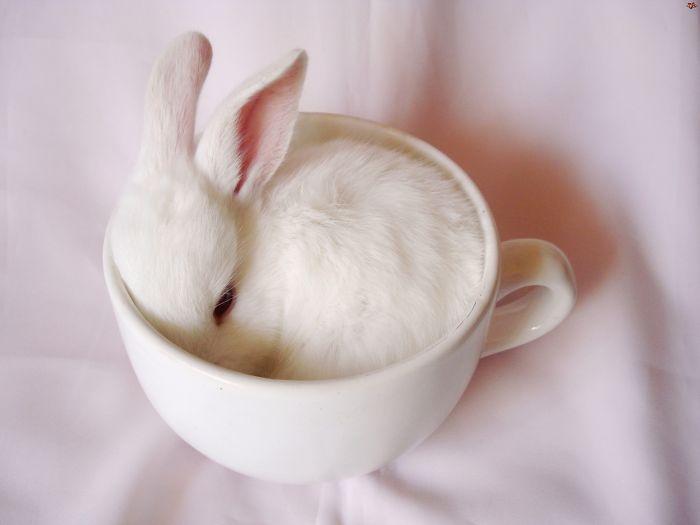 conejito dormido dentro de una taza