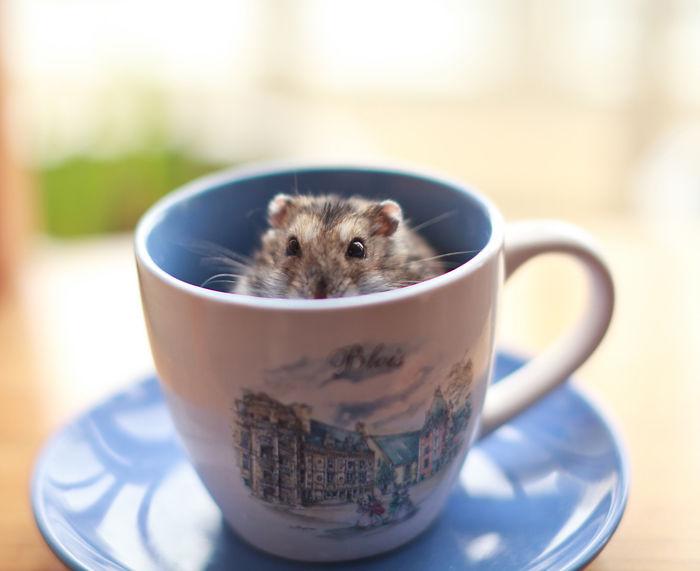 hamster pequeño dentro de una taza con una ilustracion