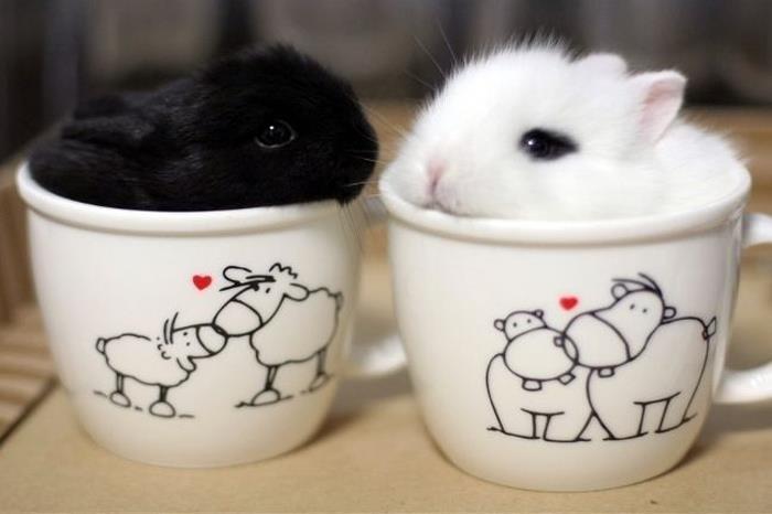 conejisto blanco y negreo dentro de una taza