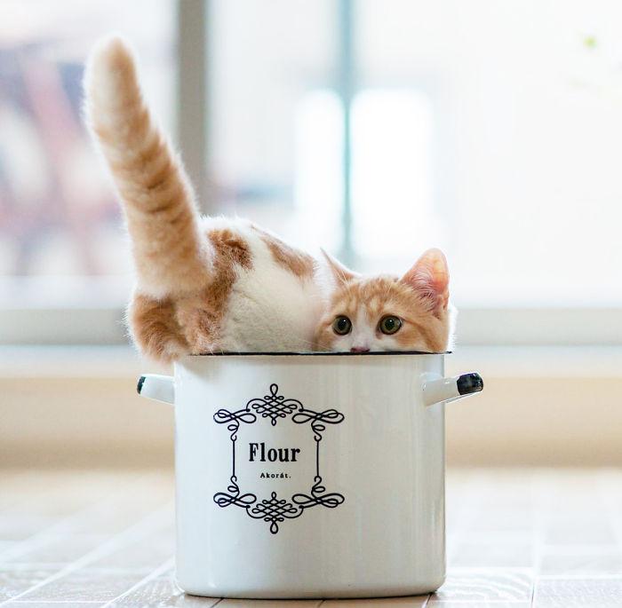 gato metiendose en una taza de peltre