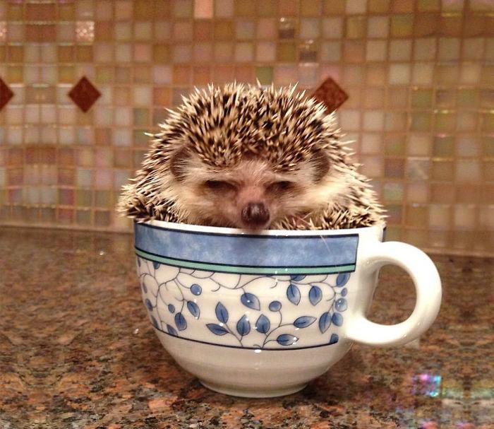 erizo dentro de una taza blanco con azul