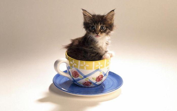 gatito de color cafe dentro de una taza de chocolate