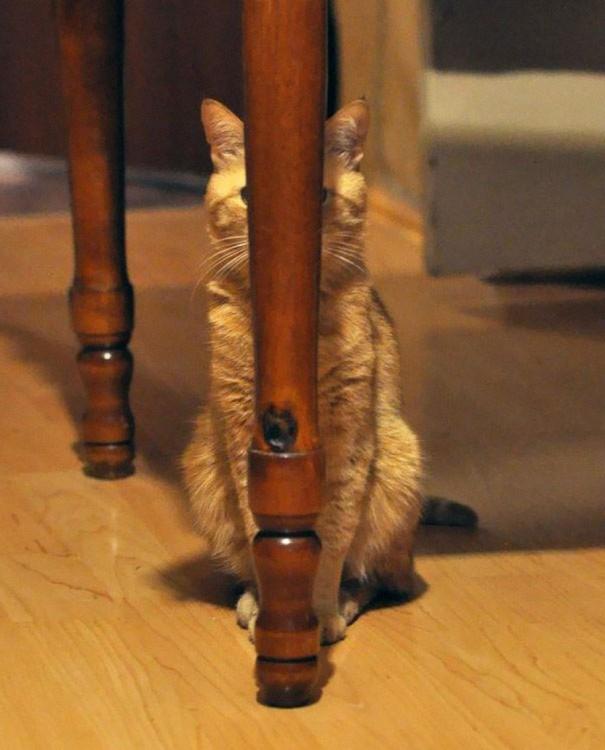 gato atras de la pata de una mesa