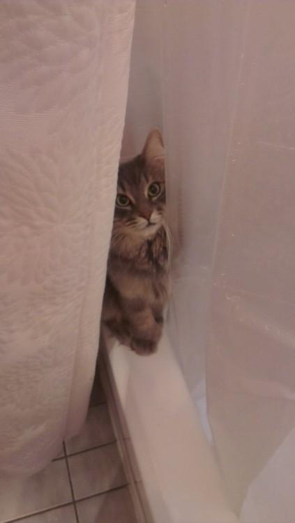 gato atras de un mueble